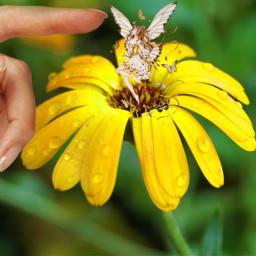 freetoedit flower yellow yellowflower yellowfairy
