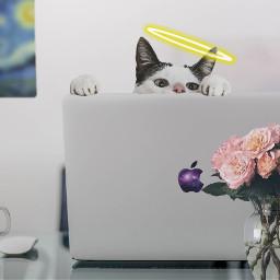 freetoedit cat looking laptop apple