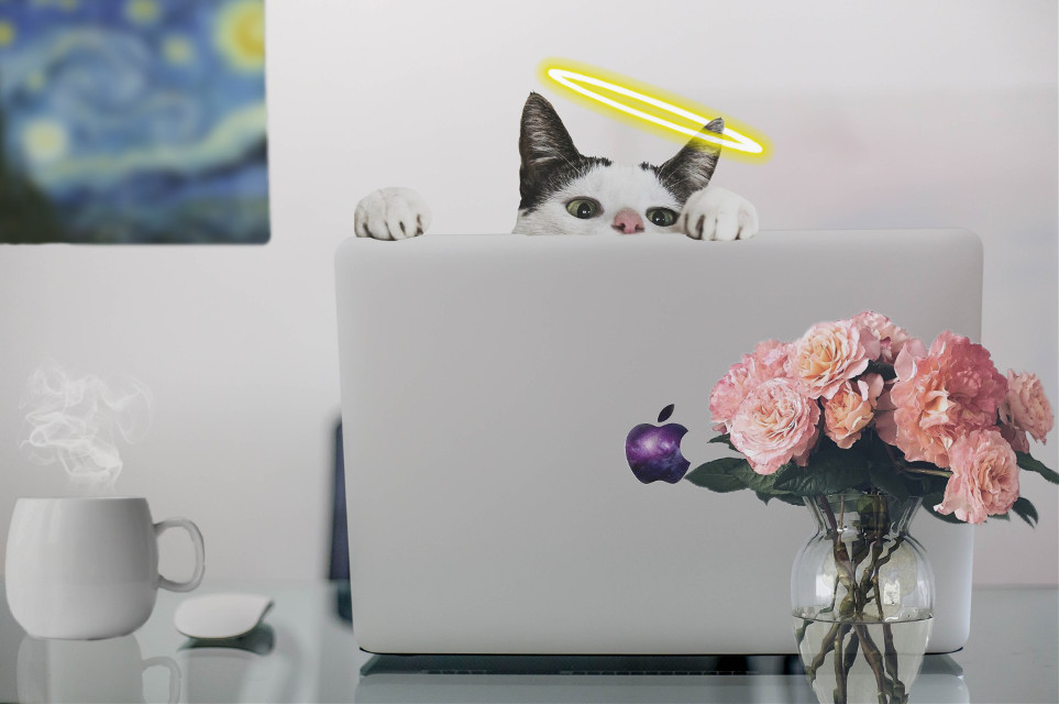 #freetoedit #cat #looking #laptop #apple #galaxy #cup #coffee #hot #angle #angelring #flower #picture #vase #white #halo