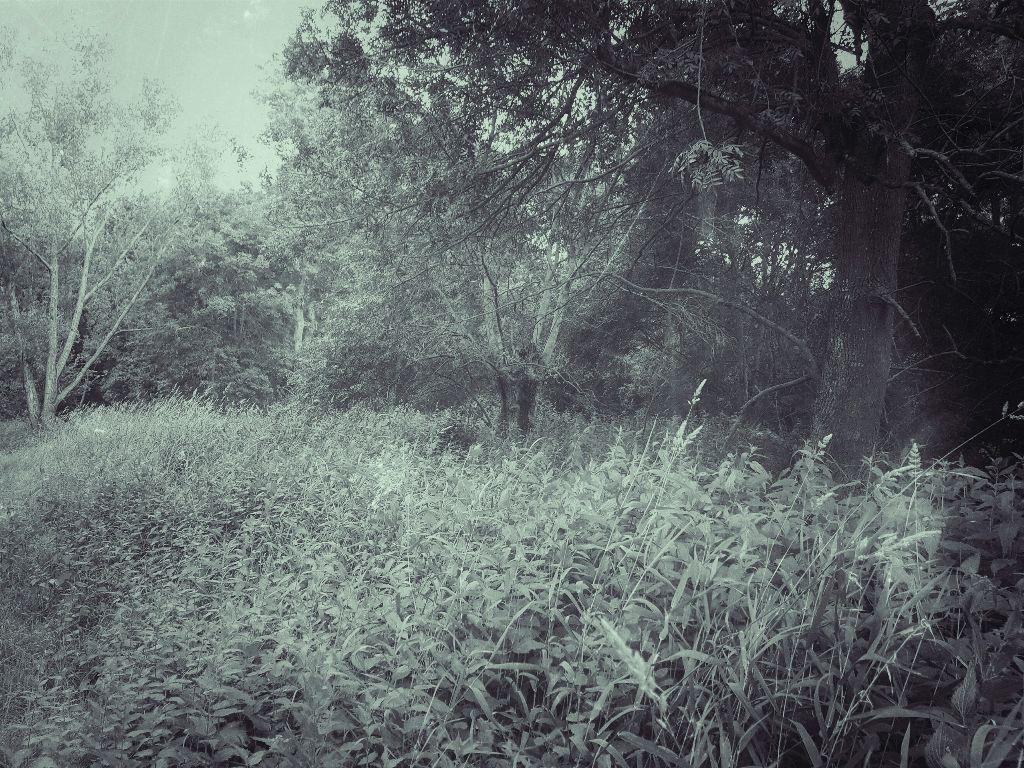 #trees #art #france #tree #path #road #pathway #route #grass #nature #artiste #artist #modernart #spiritual #contemporaryart #earth #photography #field #outdoors #wood #photographer #water #bw #blackandwhite #spirituality #photograph #outdoor #outdoors #symbolism #branch #artistic #sky #forest #wood #woodland #photographer #photography #modernartist #branches #mothernature #landscape