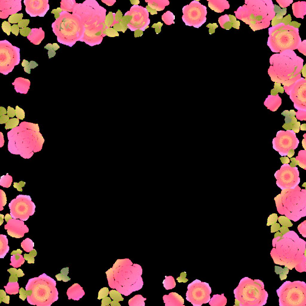 Roses Rose Border Flowers Flowers Pink