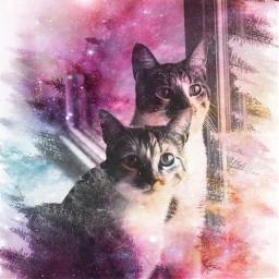 freetoedit cats kittens doubleexposure glitter