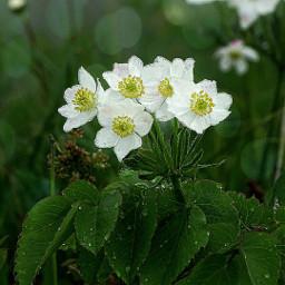flowers wildflowers white sharpeneffect myphoto freetoedit