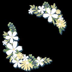 flowers ftestickers freetoedit