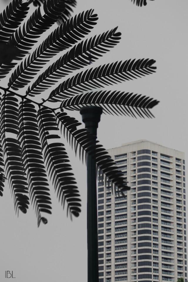 #freetoedit #city #building #urban #sky#blackandwhite