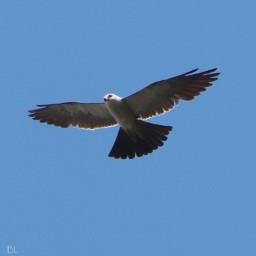freetoedit againstthesky bluesky onmystreet birds