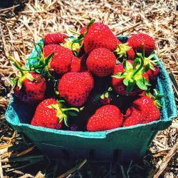 strawberries fruit strawberrypicking juicyfruit basketofstrawberries freetoedit