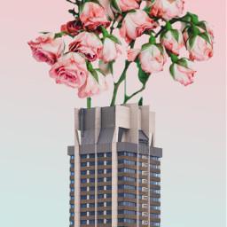 freetoedit remixit skyscraper flowers roses sky
