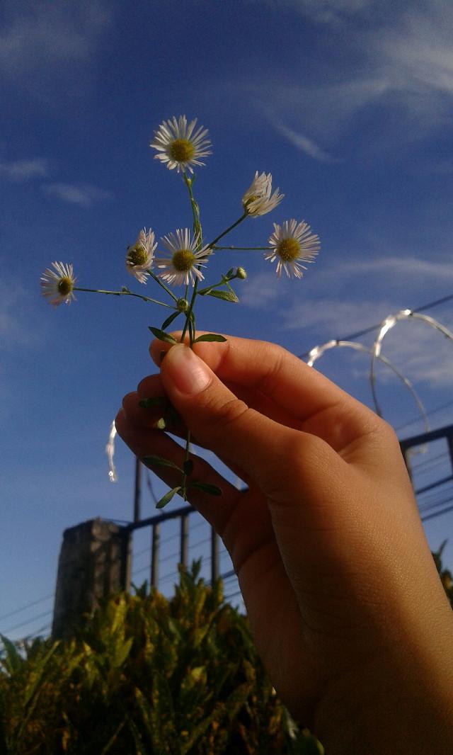 #summer #blue_sky