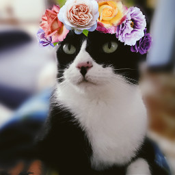 freetoedit myedit creative cute mypet srcfridaflowercrown