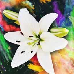 colorful flower colorsplash freetoedit nature