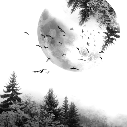 freetoedit фон whitemoon forest birds