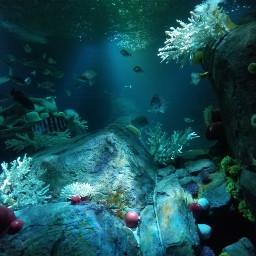freetoedit pcaquarium aquarium myphoto photography