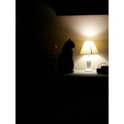 catlover blackcat midnightmemories summertime softlight pcthroughmylense