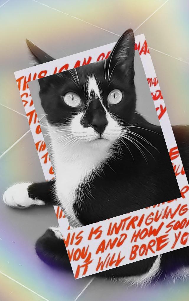Sansa #freetoedit #cute #petsandanimals #mypet #catsofpicsart #myedit #creative #catlover