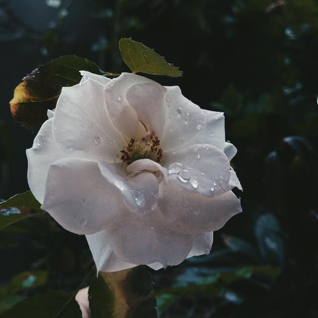 #freetoedit #picsartfilter #flower