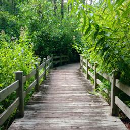freetoedit outdoors boardwalk nature green pcbridge
