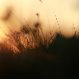 freetoedit evening eveningsun goldenhour goldenhourlight