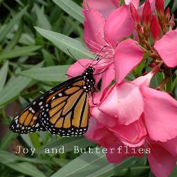 pinkoleander pinkflower monarch butterfly
