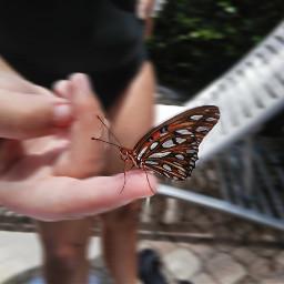 rescue release butterfly beauty flutterby