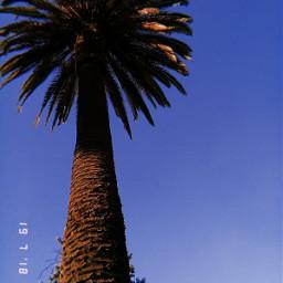 freetoedit palmera🌴 huji palmera