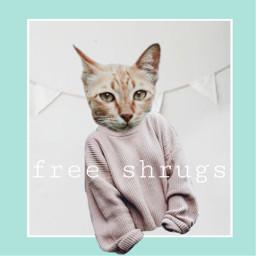 freetoedit cat cats sweater soft