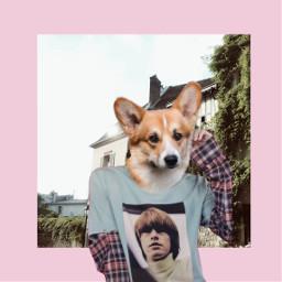 freetoedit corgi puppies cute flannel