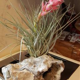 plants pink ♡