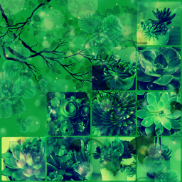 succulents moodboard aesthetic forestgreen freetoedit