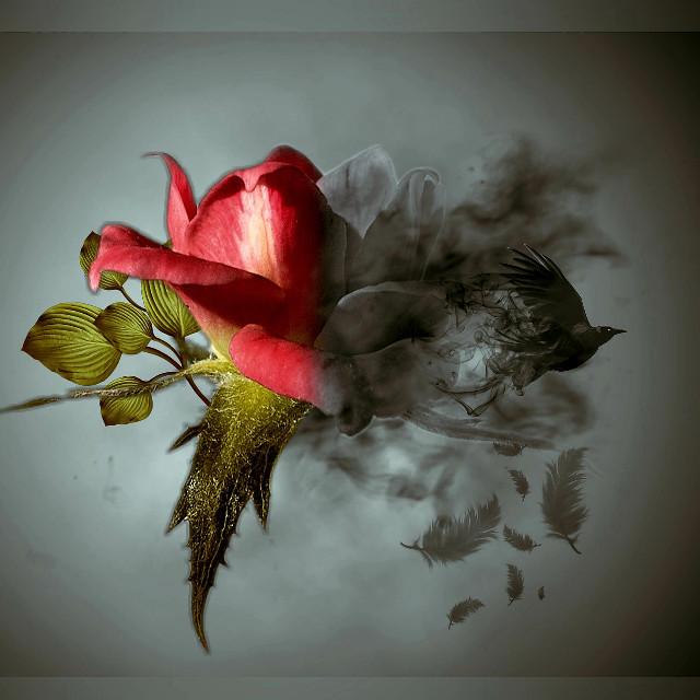 #photomanipulation #stickers #rose #dispersion #madewithpicsart #myedit #drawtools #surreal