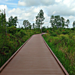 freetoedit boardwalk natute outdoors okefenokeeswamp pclines