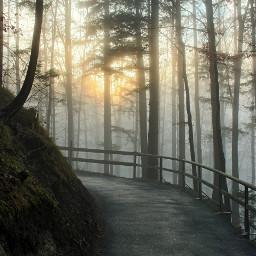 freetoedit fog sunrays path bavaria
