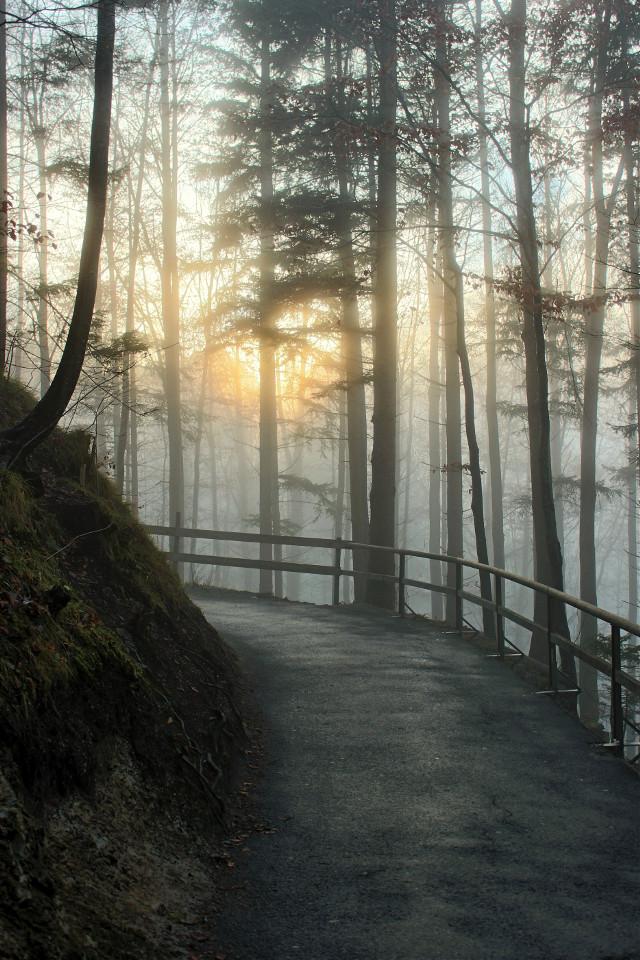 #freetoedit #fog #sunrays #path #bavaria #oldshot #füssen