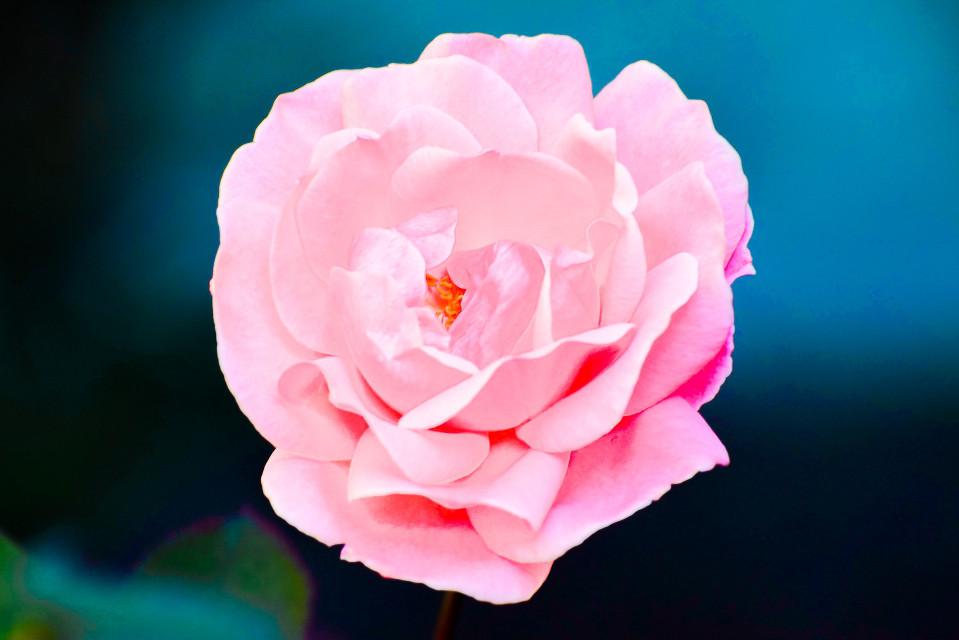 #flower #photography #fotografia
