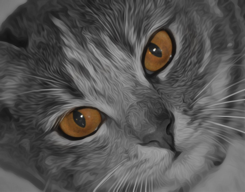 #photography #cat #pixel #colorsplash #blackandwhite