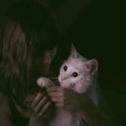 freetoedit pcpets pets cat portrait pcanimalselfie