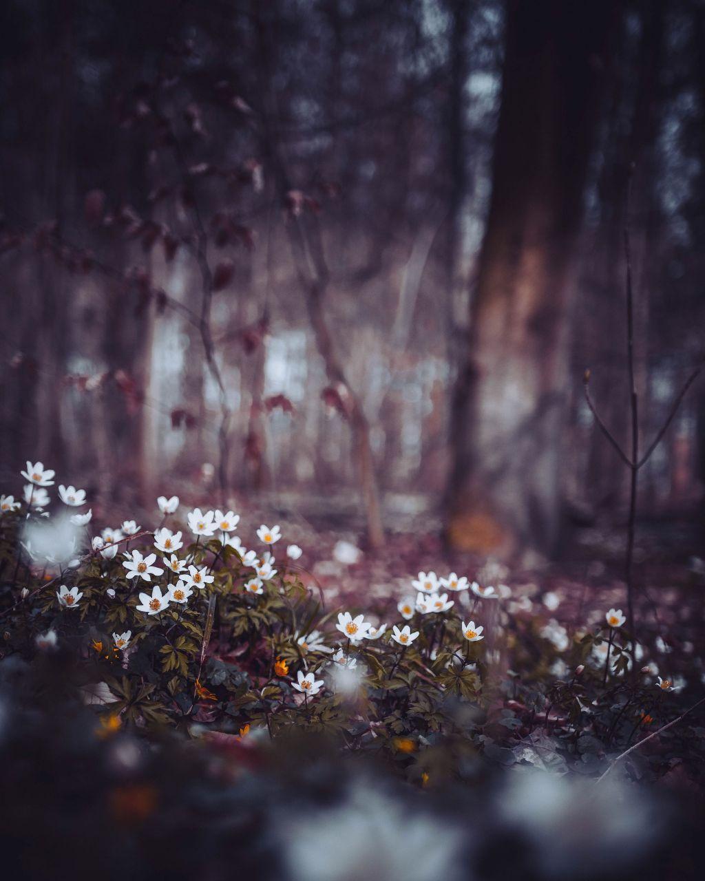 30 Picsart Nature Blur Background Hd Venera Wallpaper
