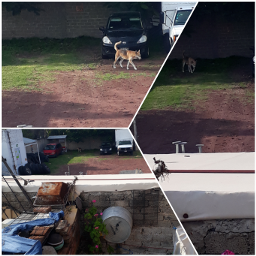 freetoedit dog perro lomito