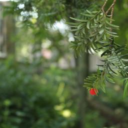 nature photographynature photography photographylovers photographybyme