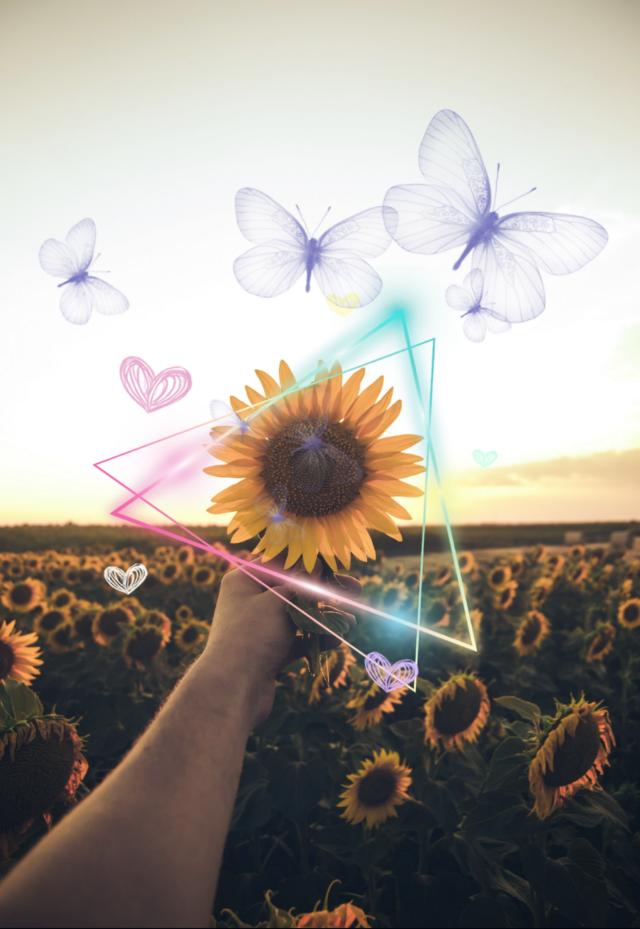 #freetoedit #butterflys #daisy #hearts #ircsunflowersgalore #sunflowersgalore