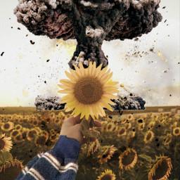 freetoedit explotion ircsunflowersgalore sunflowersgalore