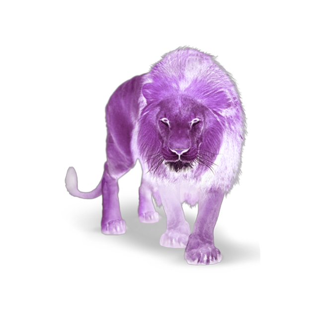 #lion #animal #wild #wildlife #purple