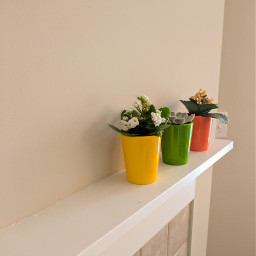 freetoedit myphoto flowerpots picsart