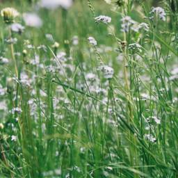 film35mm photography flower wild grass freetoedit