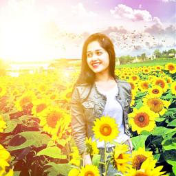 freetoedit girl background sunflower sky