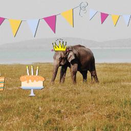freetoedit elepant birthday nice africa ircelephant