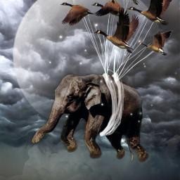 freetoedit ircelephant elephant myedit inspiration