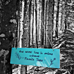 blackandwhite words blue forest