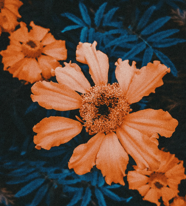 #freetoedit Is this flower beautiful?   #pcflowerpower #flower #nature #orange #color #blue #grain @picsart