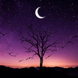 freetoedit silueta arbol monte galaxia ircmajesticmeteor